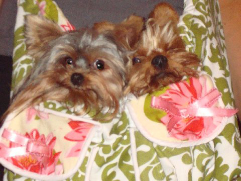 Bella and Poochie